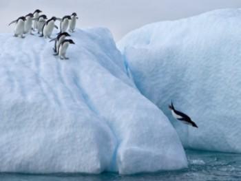 first_penguin-e1399264460504