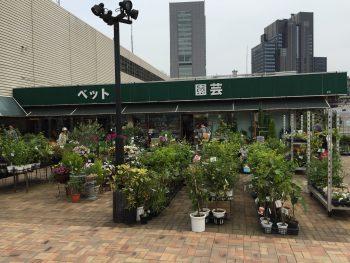 東京都 園芸店:ベランダビオトープ&ガーデニン …