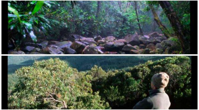 オーストラリア ライフスタイル&ビジネス研究所:息をのむ絶景が広がる、神秘的な世界の森19選 ( デインツリー熱帯雨林、ヒューオンパインの森)