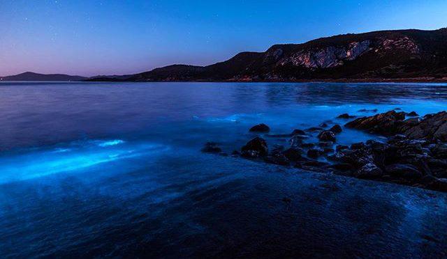 オーストラリア ライフスタイル&ビジネス研究所:タスマニアに突如した出現した青い海の正体
