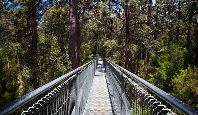 オーストラリア ライフスタイル&ビジネス研究所:息をのむほど美しい!絶景の中の歩道橋(バレー・オブ・ザ・ジャイアンツ・ツリートップ・ウォーク)