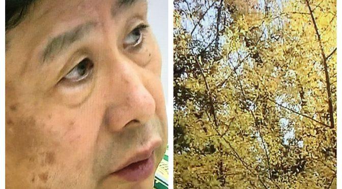 横尾忠則さんが禅寺体験で得た生き方を問われた気づき:ドキュメンタリー『横尾忠則 人生は大冒険』視聴記