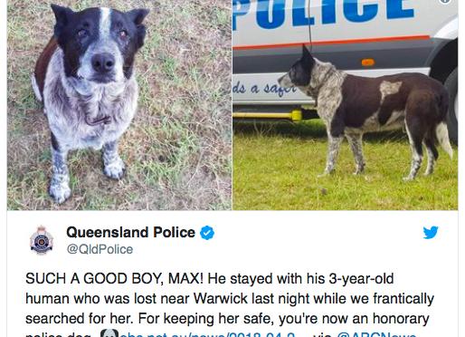 オーストラリア ライフスタイル&ビジネス研究所:老犬が、不明少女を一晩見守り表彰