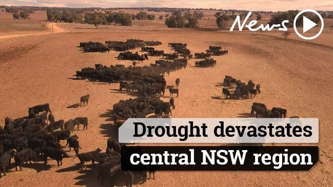 オーストラリア ライフスタイル & ビジネス研究所:東部広域を襲う歴史的な大干ばつ