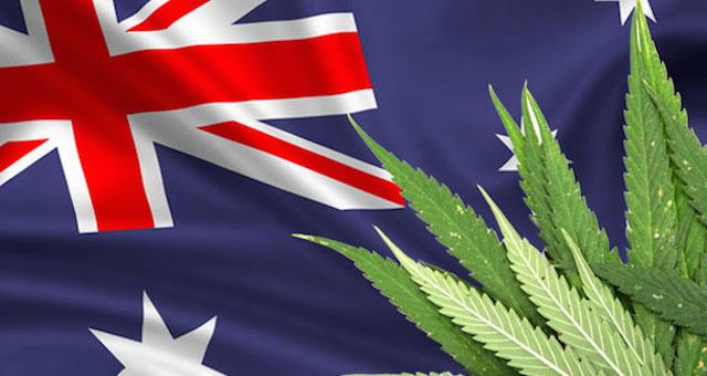 オーストラリア ライフスタイル & ビジネス研究所:高城剛さんが明かす、大麻解禁状況 ②