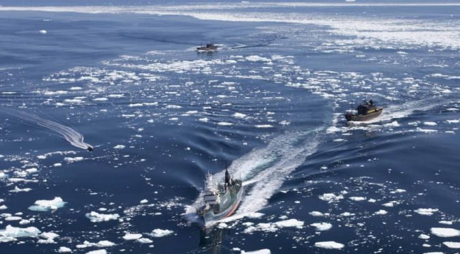 オーストラリア ライフスタイル & ビジネス研究所:ペイン外相とプライス環境相、日本のIWC脱退に失望表明