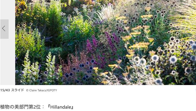 オーストラリア ライフスタイル&ビジネス研究所:見るだけで癒される、「国際庭園写真家コンテスト2019」入選作(Hillandale)