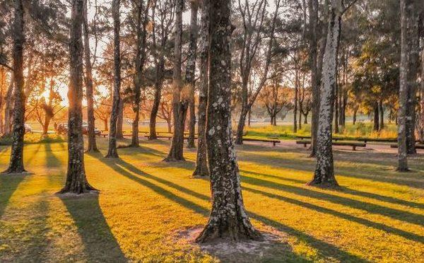 オーストラリア ライフスタイル & ビジネス研究所:世界各地の「紅葉の名所」20選(センテニアル・パーク、ロイヤル・ボタニック・ガーデン)