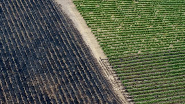 オーストラリア ライフスタイル&ビジネス研究所:森林火災、南部のワイン産地も被害