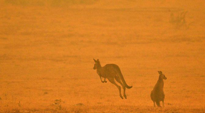 オーストラリア ライフスタイル&ビジネス研究所:森林火災、野生動物30億匹が被害(WWF発表)