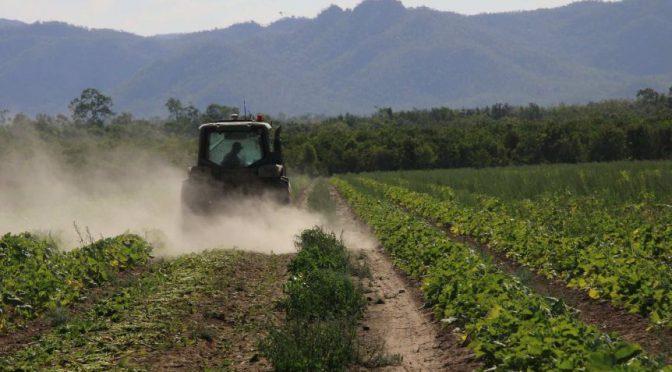 オーストラリア ライフスタイル&ビジネス研究所:労働者不足深刻、農作物3,800万ドル損失
