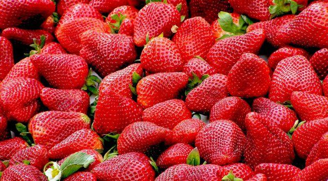 オーストラリア ライフスタイル&ビジネス研究所:日本からのイチゴ輸出伸びず。解禁から1年、検疫対応に課題